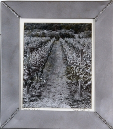 Life of a Grape 12 in. x 14 in.