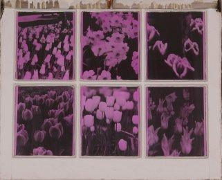 Techna Floral (6)