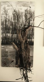 Roots and Winds _ Main 7 ft x 3 ft